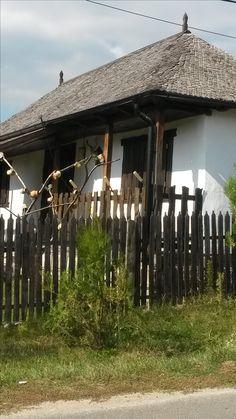 case Tisau-Hales, Jud Buzau 17