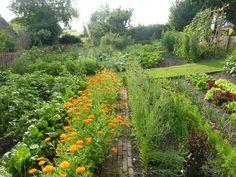 Nice and neat! Kitchen garden | jardin potager