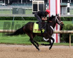 Ride On Curlin on the track at Churchill Downs on April 29, 2014. Photo By: Chad B. Harmon