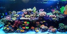What do you consider Stability? Reef Aquarium, Saltwater Aquarium, It's Going Down, Aquascaping, Salt And Water, Corals, Aquariums, Stability, Things To Come