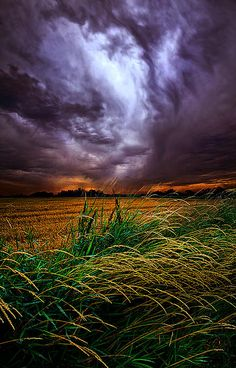 """I Will Survive""  Horizons by Phil Koch. Lives in Milwaukee, Wisconsin, USA. http://phil-koch.artistwebsites.com https://www.facebook.com/MyHorizons"