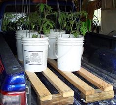 How to protect plants in bad weather