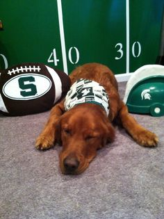 Woof! Go Green! #Spartans