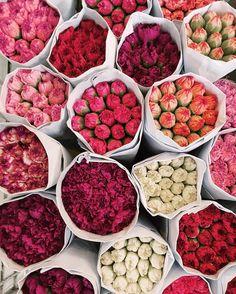 ↬ f l o w e r s 𝐩𝐢𝐧𝐭𝐞𝐫𝐞𝐬𝐭:𝐝𝐢𝐞𝐞𝐦𝐦𝐢𝐥𝐨𝐭𝐭𝐞 How Do We Know What Time It Really Is? My Flower, Fresh Flowers, Beautiful Flowers, Prettiest Flowers, Flower Bomb, Flower Aesthetic, Aesthetic Girl, Flower Market, Planting Flowers