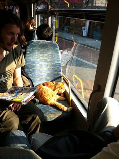 Bob -The cat was, like all London commuters, completely aloof, and neither the noisy children in the back nor the large dog in the vestibule area nor, indeed, the juddering of the bus perturbed him one whit.