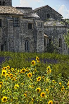 Vincents Garden ~ Saint-Remy-de Provence, France (Photo by Joachim G. The Places Youll Go, Places To See, Ville France, Provence France, French Countryside, South Of France, Kirchen, France Travel, Vincent Van Gogh