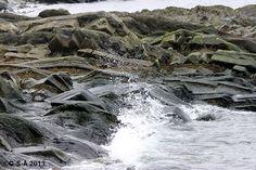 Gaspesie Winter Beach Water, Outdoor, Gripe Water, Outdoors, Outdoor Games, The Great Outdoors