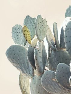 Cactus Print Cacti Art Cactus Photo Minimal by WilderCalifornia art garden indoor plants Cactus Art, Cactus Flower, Cactus Leaves, Flower Art, Photo Desert, Grand Cactus, Decoration Cactus, Cactus Plante, Desert Photography