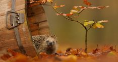 Autumn is a magical season for photographers, especially when those magical golden colors are complemented by an often unwitting animal model. These are some of the best autumn animal photos we've ever seen, but we're sure that there are plenty out there that we've missed for you to share with us!