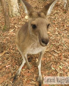 Australia, el paraíso animal  #Australia #animales #viajes