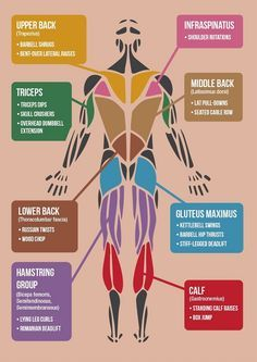 Infographic: The 'Best' Exercises For Each Muscle Group In The Body - DesignTAXI.com more motivation @ https://www.facebook.com/actionalways