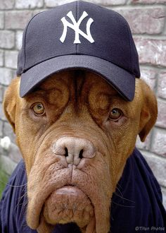 dog with yankees hat What are blog tags and what purpose do they serve?