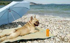 Portugal também terá praia para cães