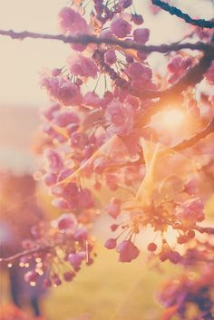 Blossom flowers in the sunlight Belle Photo, Bokeh, Pretty Pictures, Beautiful World, Mother Nature, Beautiful Flowers, Art Photography, Scenery, Photos
