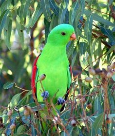 Breeders Delight Parrot Nesting Mix 2kg To Win Warm Praise From Customers Bird Supplies Other Bird Supplies