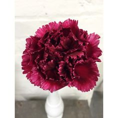 Heirloom carnations Local Color, Carnations, Pretty Flowers, January, Spring, Plants, Beautiful Flowers, Flora, Plant