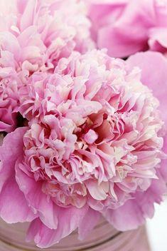 pretty pink flowers                                                                                                                                                                                 Plus