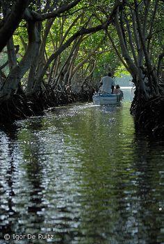 Engagement Shoot. Mangrove River Boat Ride. Mangroves boat tour-Roatan