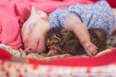 piglet and kitten bff