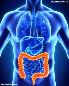 Learn 4 scientific reasons digestive health matters and the 1 simple solution to improve your digestion, decrease bloating and improve your overall gut health. Gut Health, Health Tips, Health Matters, Public Health, Intestines Anatomy, Medical Posters, Kidney Detox, Mental Health Treatment, Fact Of The Day
