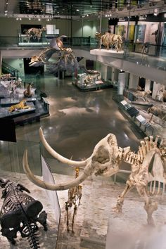 NATURAL HISTORY MUSEUM Los Angeles | The Age of Mammals