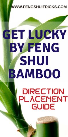 which direction to keep bamboo tree,feng shui bamboo plant in living room,how many bamboo stalks are lucky,lucky bamboo dying meaning,lucky bamboo plant benefits,can we place lucky bamboo in bedroom,3 layer lucky bamboo plant meaning, where to place lucky bamboo in office. #fengshui #luckybamboo #bamboocare #fengshuibamboo #bambooplacement Feng Shui Lucky Bamboo, Lucky Bamboo Plants, Plant Meanings, Bamboo Care, Bamboo Stalks, Living Room Plants, Herbs, Bedroom, Tips