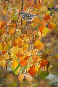 ❤ ℒℴѵℯ♡ ‧:•ϓᏋԼԼOᗯ•:‧ ♥ ⋱‿ ❤ • ᗩ ᑌ t ᑌ ᗰ ᑎ ✧ ᎶOԼᗪᏋᑎ ᎶԼOᎳ↣✧❂✧ Fall beauty