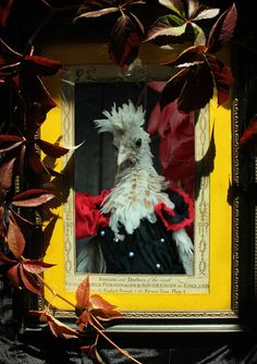 Gothic Vampyre Costumes for our Chickens. Wispy our Chamois Crested Polish Frizzled Chick