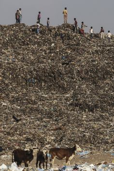'Trash Mountain' Rises Up In Mumbai As City Runs Out Of Space For Its Own Waste via @huffingtonpost #Environmentalism #Sustainability