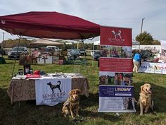 Come see Wrinkle and Mickie at the Maryland Veterans Memorial Museum's Salute to Service event in St Charles County! Salute To Service, Memorial Museum, Veterans Memorial, Service Dogs, Armed Forces, Maryland, Special Forces, Military