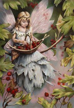 Hawthorn Fairy