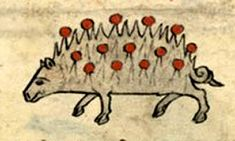 Medieval Bestiary : Hedgehog Gallery