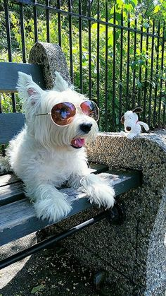 "Summertime westie From your friends at phoenix dog in home dog training""k9katelynn"" see more about Scottsdale dog training at k9katelynn.com! Pinterest with over 18,000 followers! Google plus with over 119,000 views! You tube with over 350 videos and 50,000 views!! Twitter 2200 plus;)"