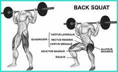 squat vomicose barbell