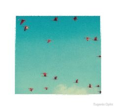 Scarlet ibises flying across the blue sky.