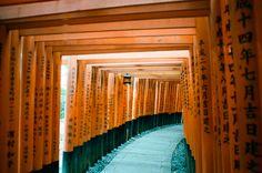 Japan travel photography 35mm film - torii gates at Fushimi Inari Shrine in Kyoto