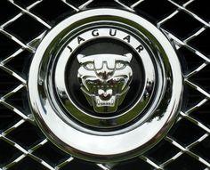 8 Jaguar Icons Ideas Jaguar New Jaguar Jaguar Car