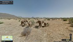 Save the Elephants engages potential donors using Google Street View #digital #charity #notforprofit
