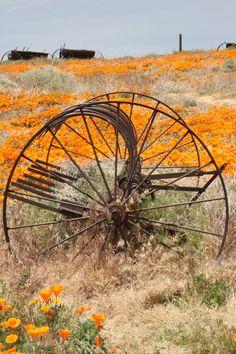 Wildflowers & old farm equipment