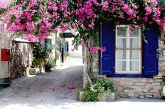 Galaxidi bougainvillea, a photo from Fokida, Central Greece Bougainvillea, Gazebos, Arbors, Greece Art, Hanging Flowers, Flowering Vines, Art And Architecture, Ramen, Places To See