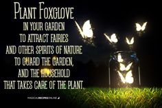If Foxglove is growing in your garden it will attract fairies and other spirits…