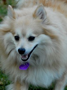 small white dog breeds grooming
