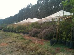 the nursery at Brightside Aero Estate, supplying all indigenous plants for gardens and common areas