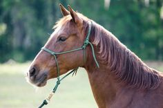 The new Parelli Blog is now up and running! Check it out at http://parellinaturalhorsetraining.com/news/
