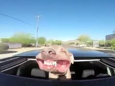 Sunroof Is the Best Thing That Ever Happened to This Dog
