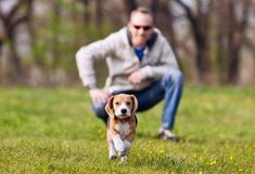 How to train a dog? check out Doggy Dan online Dog trainer.