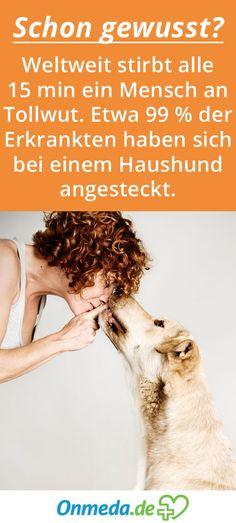 Die Nieren Nierenrinde: Nephrone   Fakten // Wissen to go   Pinterest