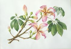 Botanical Sketches and Other Stories: Botanical Art Gallery