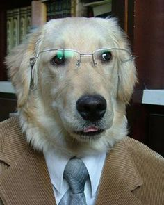 This dog is in a suit!