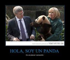 Hola, soy un panda... (presentaciones) (ser) - ¡Para el primer día de clases! - Visit www.estudiafeliz.com for more fun materials for Spanish teachers and students!